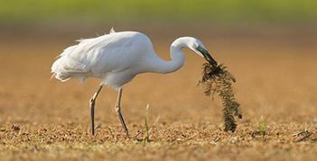 Szigetköz csodás madarak